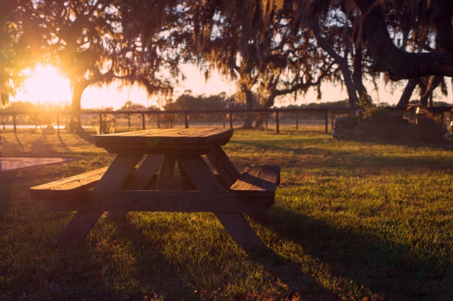 Commercial Outdoor Picnic Tables.jpeg